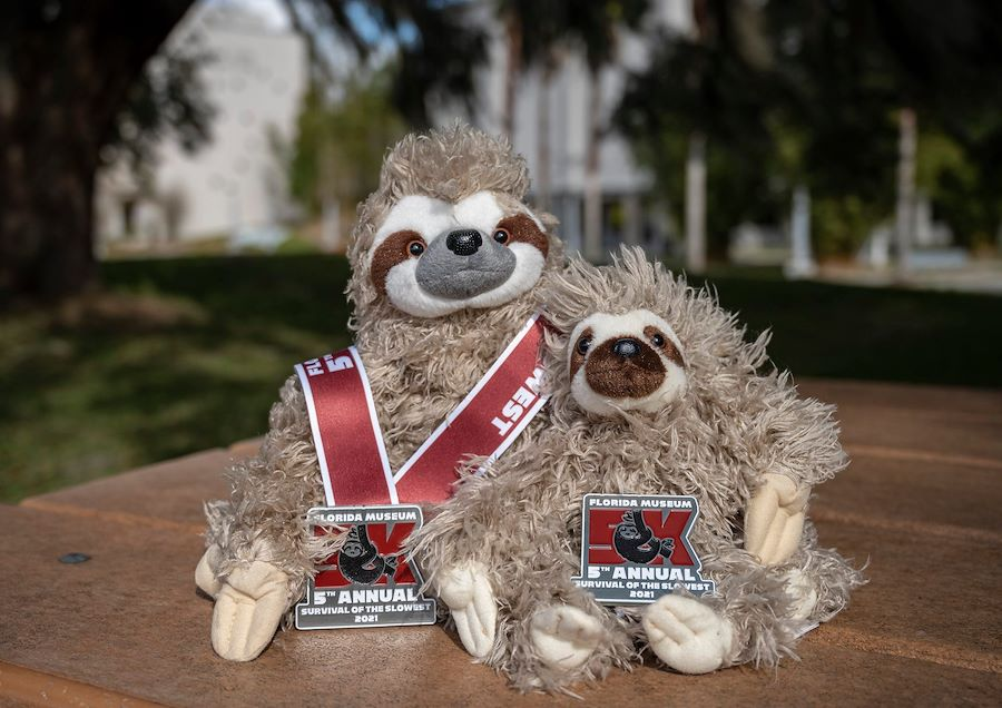 Celebrating sloths with a 5k
