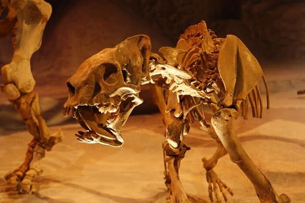Gainesville attractions: Florida Museum of Natural History