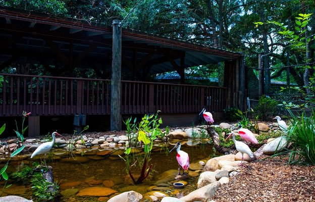 Gainesville Attractions - Santa Fe College Teaching Zoo