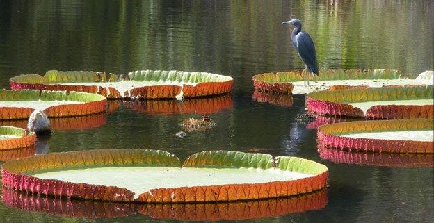 Things to do in Gainesville: Kanapaha Botanical Gardens